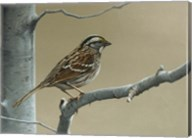 White Throat Sparrow Fine-Art Print