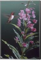 Fireweed Fine-Art Print