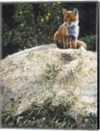 Fox Pup At Den Entrance Fine-Art Print