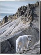 Ramparts- Mountain Goats Fine-Art Print