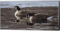 A Break In The Ice- Canada Geese Fine-Art Print