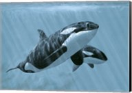 Mother And Son- Orcas Fine-Art Print