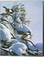 Snow On The Pine - Chickadees Fine-Art Print