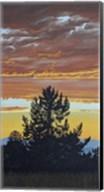 Evening Pine Fine-Art Print