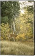 Autumn Aspen - White Tailed Deer Fine-Art Print