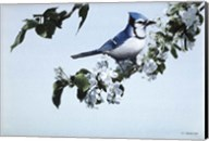 Apple Blossoms And Bluejay Fine-Art Print