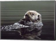 Just Resting - Sea Otter Fine-Art Print