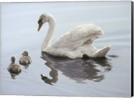 Mute Swan And Two Cygnets Fine-Art Print
