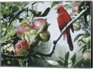 Cardinal And Apples Fine-Art Print