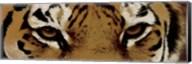 Tiger Eyes Fine-Art Print
