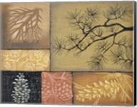 Pine Cones 1 Fine-Art Print