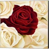 Rose Composition (Detail) Fine-Art Print