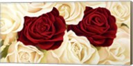 Rose Composition Fine-Art Print