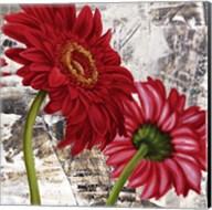 Red Gerberas III Fine-Art Print