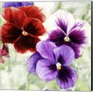 Pansies I Fine-Art Print