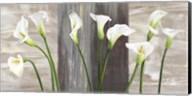 Country Callas Fine-Art Print