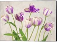 Tulipes Fine-Art Print