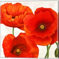 Poppies I Fine-Art Print