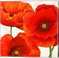 Poppies I Fine-Art Print