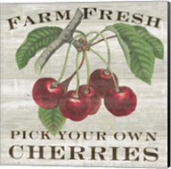 Farm Fresh Cherries I Fine-Art Print