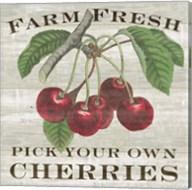 Farm Fresh Cherries I Fine-Art Print