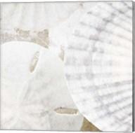 White Shells II Fine-Art Print