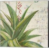 Aloe II Fine-Art Print