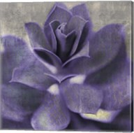 Lavender Succulent I Fine-Art Print