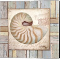 Beach Shell III Fine-Art Print