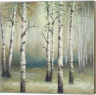 Late September Birch II Fine-Art Print