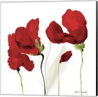 All Red Poppies II Fine-Art Print