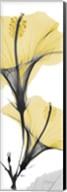 Hibiscus Yellow Fine-Art Print