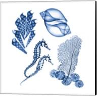 Blue Shells One Fine-Art Print
