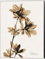 Aged Azalea Fine-Art Print