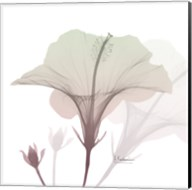Neapolitan Hibiscus Fine-Art Print