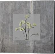 Concrete Parsley Fine-Art Print