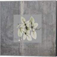Concrete Basil Fine-Art Print