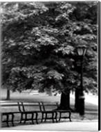 Central Park Benches Fine-Art Print