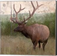 Elk Stride Fine-Art Print