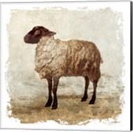 Rustic Sheep Fine-Art Print
