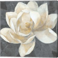 Majestic Magnolia Neutral Sq Fine-Art Print