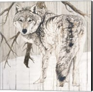 Wolf in Woods on Barn Board Fine-Art Print