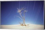 Bright Cottonwood Drum Fine-Art Print