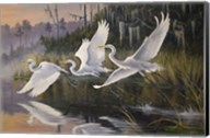 Morning Departure Egrets Fine-Art Print