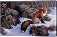 Mid Winter Pause - Red Fox Fine-Art Print