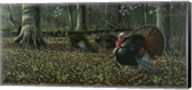The Suitor - Wild Turkeys Fine-Art Print