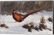 Winter Walk Pheasant Fine-Art Print