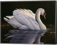 Reflection - Mute Swan Fine-Art Print