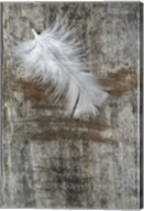 White Feather on Wood Fine-Art Print