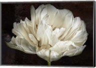 Double White Tulip Fine-Art Print